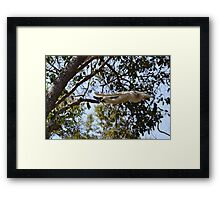 Sifaka Superman Framed Print