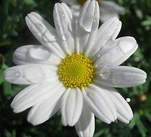 Dainty Daisy by BlueMoonRose