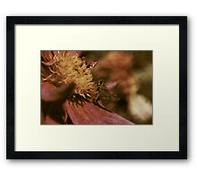 Moth and Dahlia Framed Print