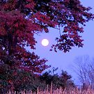 October Moon with Shingle Oak by TrendleEllwood