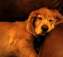 Couch Potato by Polly Peacock