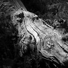 Scary Tree- Montecute Conservation Park by Ben Loveday