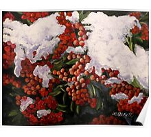 """""""Resilience""""-- Winter Berries in Snow Poster"""