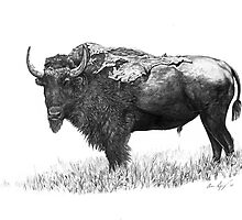 Bison by Aaron Spong