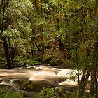 Tasmanian river #2 by samg