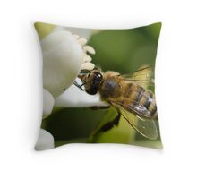 Bee on an Orange Blossom Throw Pillow