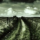 Haunted Path by Ms-Bexy