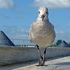 Pretty Bird on the Catwalk? by Eileen McVey
