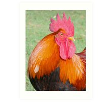 Thor - Rooster Art Print