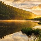 Misty Morning by Alan Owens