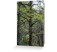 SPRING GROWTH Greeting Card