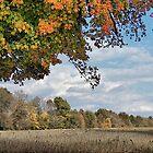Beautiful Ohio by Monnie Ryan
