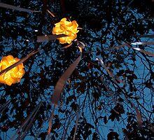 Lights in the Sky by Joseph Miller