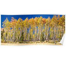 Colorful Aspen Panorama Poster
