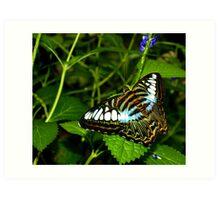 Penang Butterfly Garden Art Print