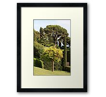 orange tree Framed Print