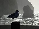 Head Gull by mikebov
