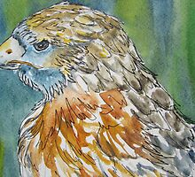 Hawk Profile by Jeanne Vail