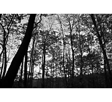Silhouette Changed Photographic Print
