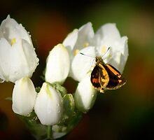 Teeny Weeny Butterfly by myraj