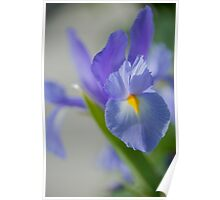 Blue Whimsy Poster