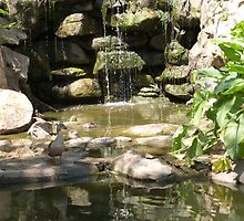 Wood Ducks enjoying Grotto Water feature 'Veale Gardens', Adelaide. by Rita Blom