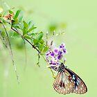 Butterfly Blue 2 by Jenny Dean
