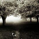 fog watcher by Nikolay Semyonov