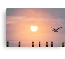 Sunset Pelican Canvas Print