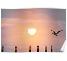 Sunset Pelican Poster