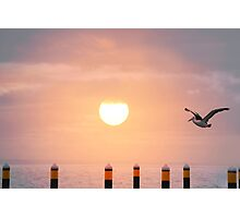 Sunset Pelican Photographic Print
