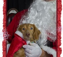A very doxie Christmas 6 by Sarah Guiton