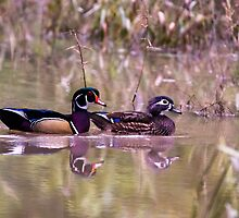 2013 Oct Wood Duck Drake and Hen by Rick  Grisolano Photography LLC