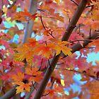 Autumn Finale by K D Graves Photography