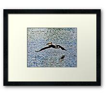 Pelican Flying Over Water Framed Print