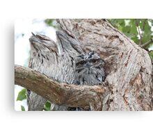 Tawny Owls, baby & parents Canvas Print