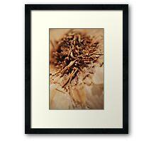 GarlicTop Framed Print
