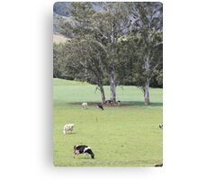 Cows in the Pasture Canvas Print