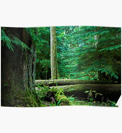 Tranquil Forest Poster