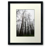 Foggy Woods Framed Print
