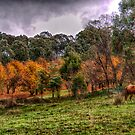 Tumbarumba Autumn - Tumbarumba NSW - The HDR Experience by Philip Johnson