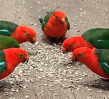 King Parrots by Wendy Sinclair