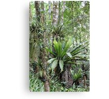 Australian Rainforest Canvas Print