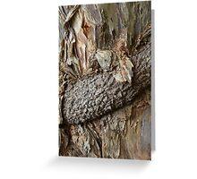Paperbark strangled Greeting Card