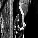 The Old Door Handle BW by DavidsArt