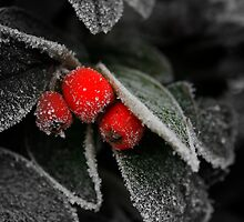 Frozen leaves With red Berries by edesigns14