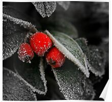 Frozen leaves With red Berries Poster