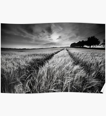 Wheat field, black and white Poster