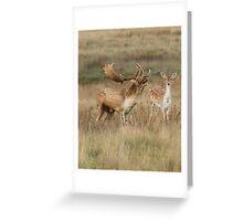 Fallow Buck and Doe Greeting Card