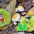 Chestnuts in husk with mushrooms by 7horses